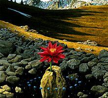 """""""Fertile Ground"""" by Rob Schouten"""