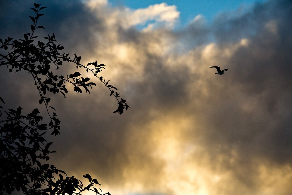 taking flight by Keith Midson