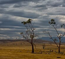 Australian summer sky by Keith Midson