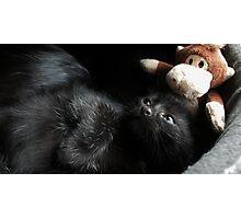 Little Monkeys Photographic Print