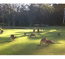 Iconic Kangaroo under Hills Hoyst !!! Photographic Print