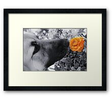 Beauty Stands Out Framed Print