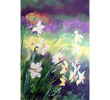 Majestic Daffodils Photographic Print
