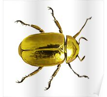 Gold Beetle Poster