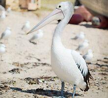 A wonderful bird is the Pelican by Linda Lees