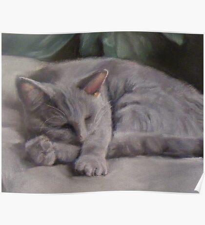 Russian blue cat, sleeping Poster