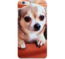 Dexter the Potted Chihuahua  iPhone Case/Skin