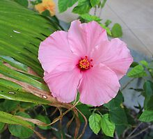 Tropical Pink Flower by kaitlyns-photos