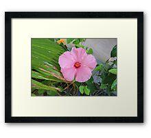 Tropical Pink Flower Framed Print