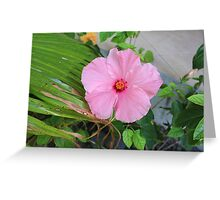 Tropical Pink Flower Greeting Card