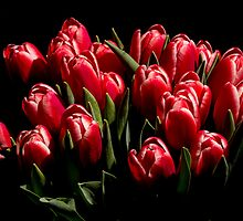 Red tulips  by LacoHubaty