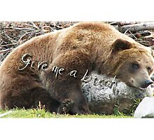 Ours au Wyoming Photographic Print
