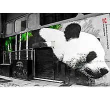 Spray paint panda Photographic Print