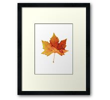 Egyptian Leaf Framed Print