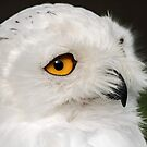 Snowy Up Close by Mark Hughes