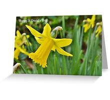 Daffodils - St David's Day Card Greeting Card