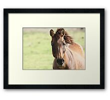 Zelda the Zorse Framed Print