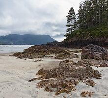 Rocky Shores by Carrie Cole