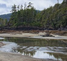San Josef Bay Reflections by Carrie Cole