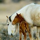 First Wild Foal of the Season by Kent Keller