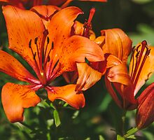 Orange Lily by Patrycja Polechonska