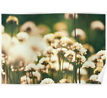 Bokeh Flower Field Poster