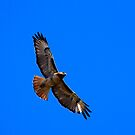 Red Tail, Blue Sky - iPad by KarDanCreations