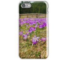 Crocus Field and Pen iPhone Case/Skin