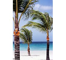 Dance of the Palm Trees Photographic Print