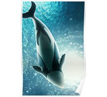 Hector's Dolphin Poster