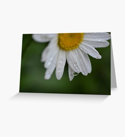 Drip From A Daisy Greeting Card