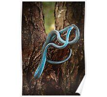 Tree Snake Poster