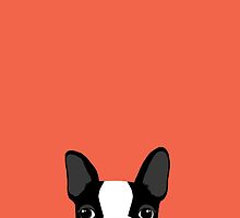 Boston Terrier by AnneWasHere