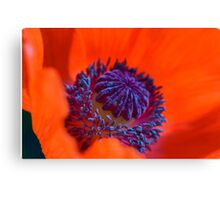 Bursting with Colour Canvas Print