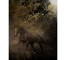 Ghost Horse Photographic Print