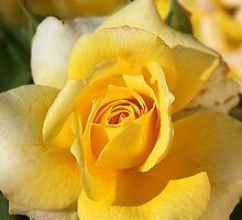 Happy As A Rose in the Sun by Joy Watson