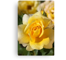 Happy As A Rose in the Sun Canvas Print