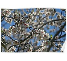 Flowers of the Almond Tree Poster