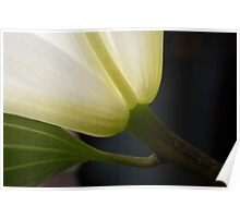 STEM OF A LILY Poster