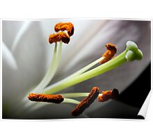 LILY STAMEN ABSTRACT Poster