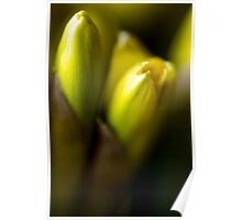 ABSTRACT OF DAFFODILS IN BUD Poster