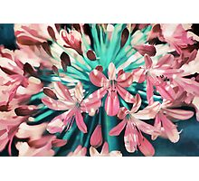 Sunny Agapanthus Flower in Pink & Teal Photographic Print