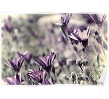 Spring Blooms.............. Poster