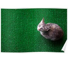 Cat Mat Poster
