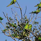 Green Parakeets by Dennis Cheeseman