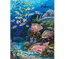 Mutton Reef Photographic Print