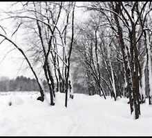 Rotary Park in New Snow by Wayne King