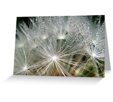 Waterdrops on a white dandelion Greeting Card