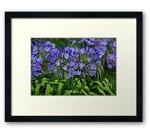 California Purple Framed Print