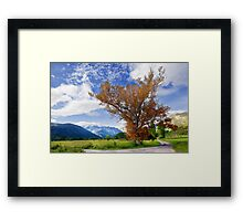 tree and fields Framed Print